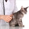 Ветеринарные клиники в Кимрах
